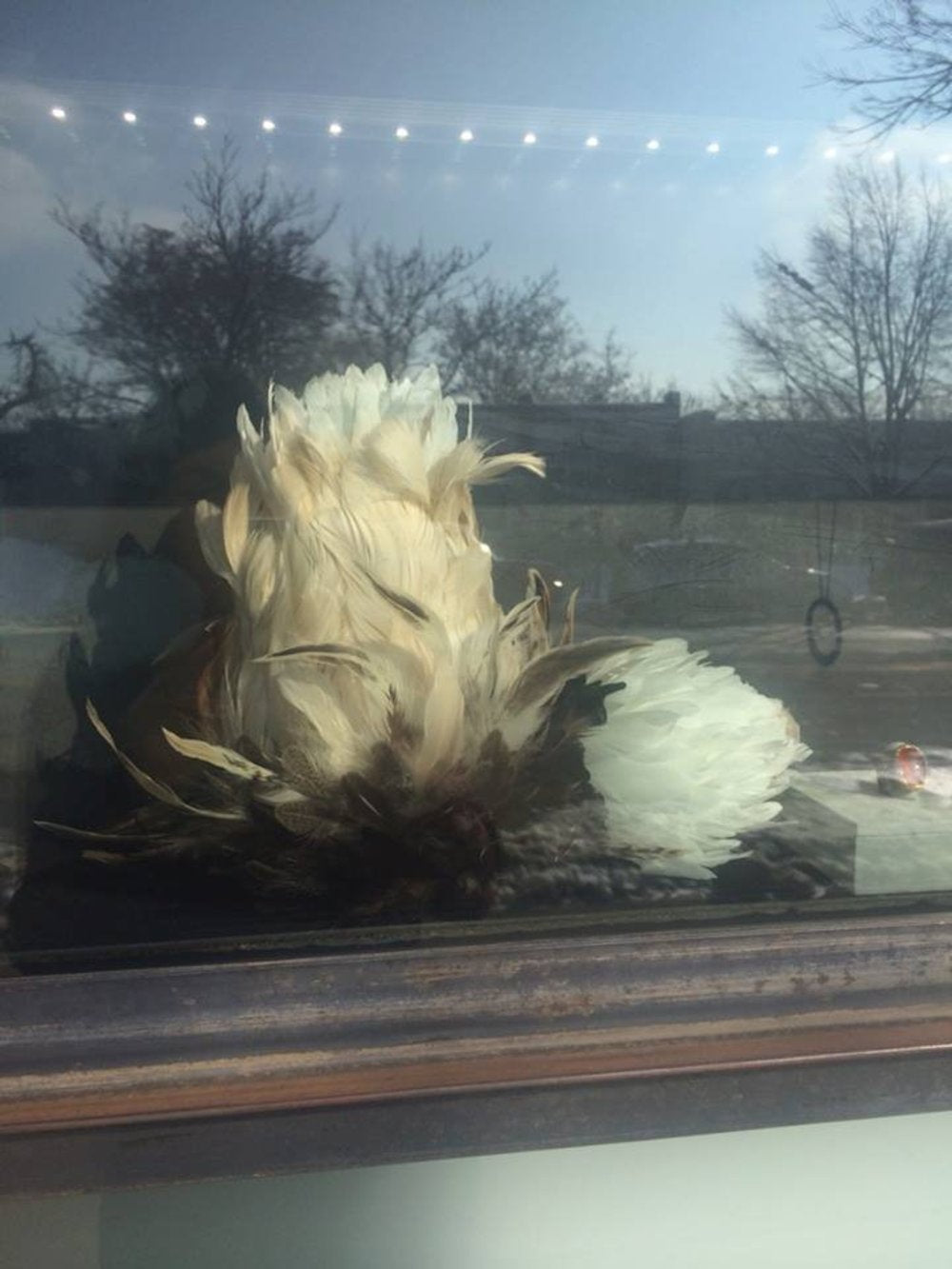 Todd Reed romantic feathers window display