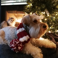 Christmas Striped Dog Scarf