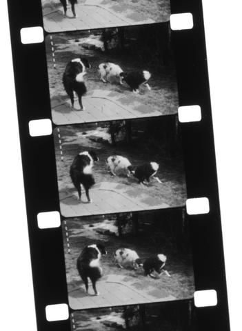 Example images taken on 16mm movie film
