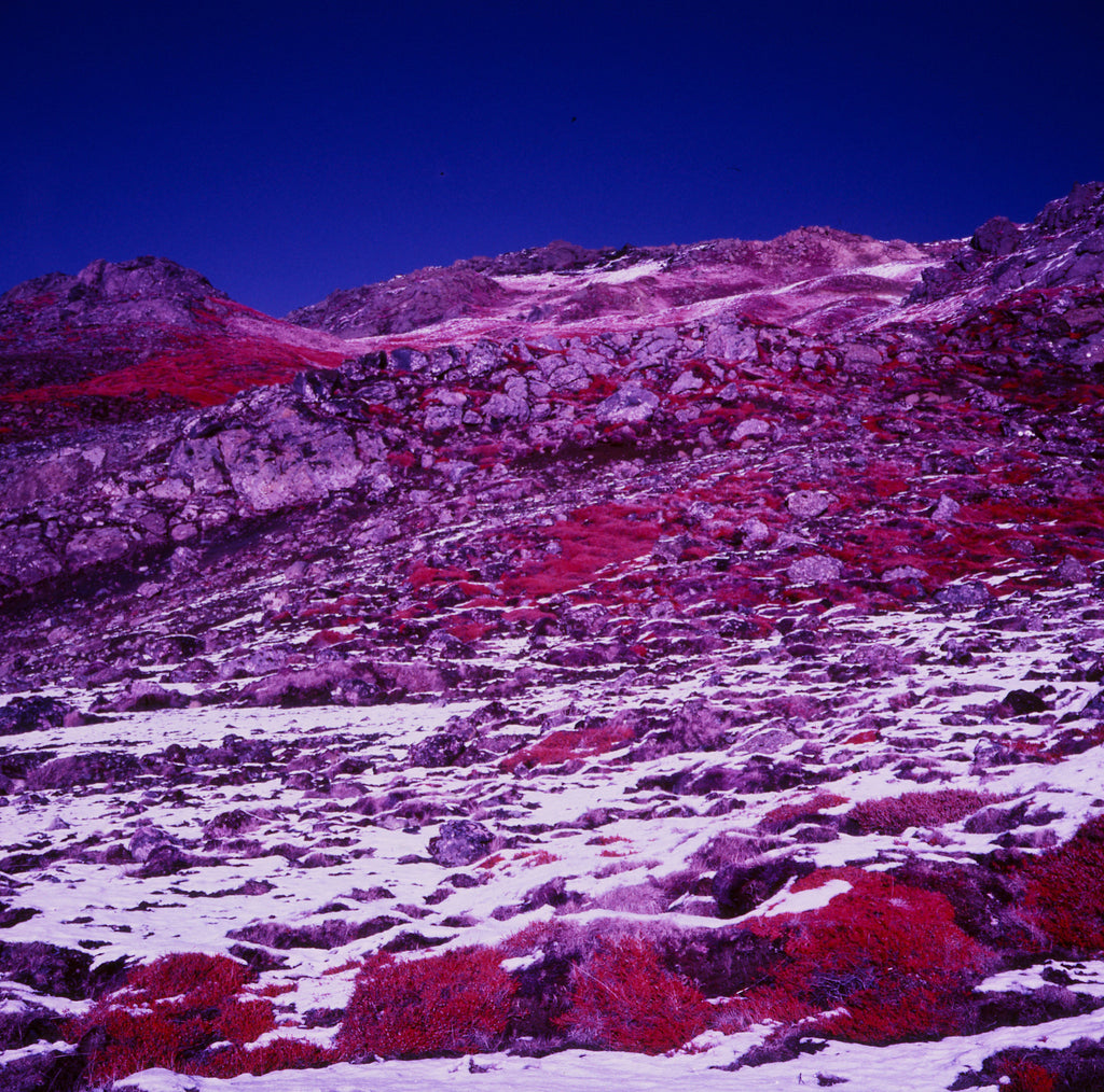 Kodak Aerochrome film - sample shot