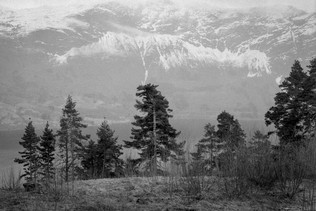 large landscape shot on foma film black and white