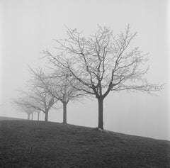 Sample film photo of receding trees on ilford hp5 plus B&W medium format film - 120