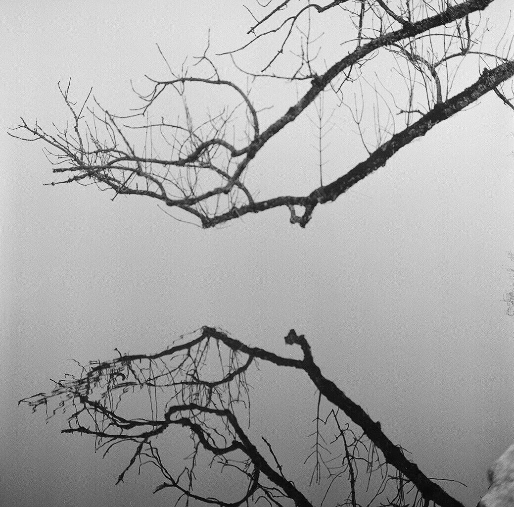 Sample film photo of reflected branch on ilford hp5 plus B&W medium format film - 120