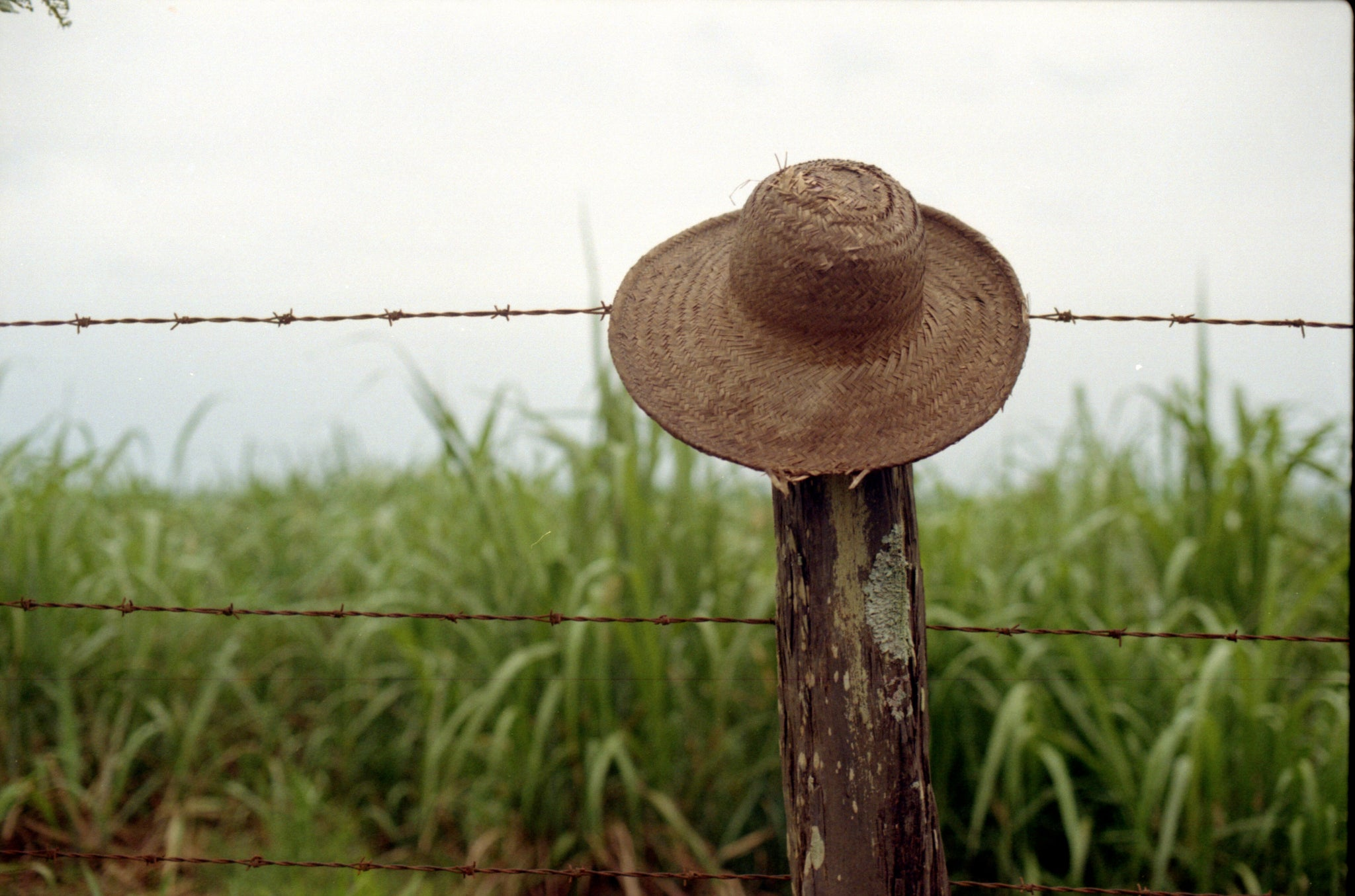 sample shot of hat on kodak pro image 100 35mm film available to buy