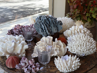 Assorted Marine Ornaments