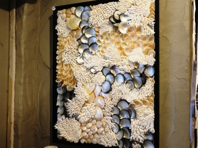toute coquille des marinières framed shell artwork