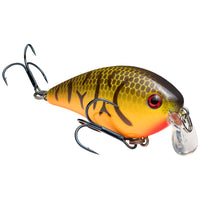Orange Belly Craw Strike King KVD 1.5 Shallow Squarebill Crankbait