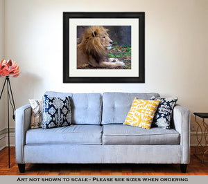 Framed Print, African Male Lion