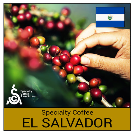 Specialty Coffee - El Salvador Mapache