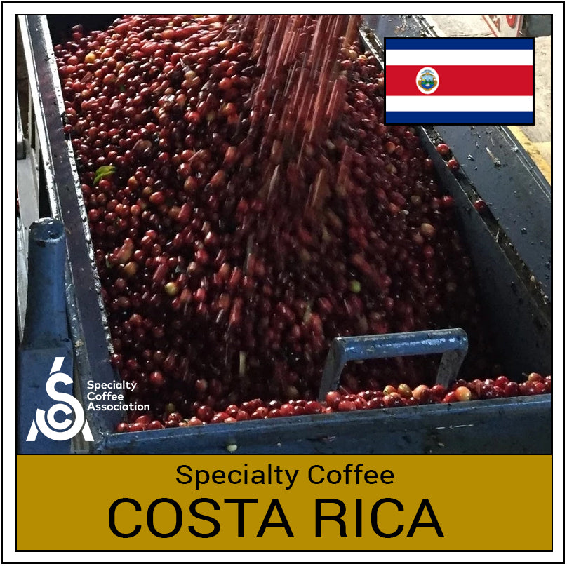 Specialty Coffee - Costa Rica Tarrazu Honey Bourbon