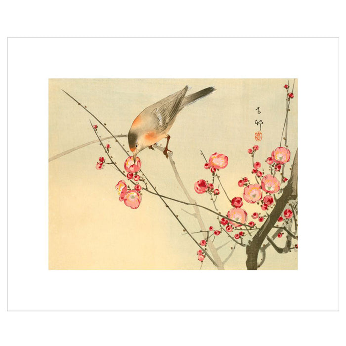 Chinese Painting White Eye Bird on Blossom