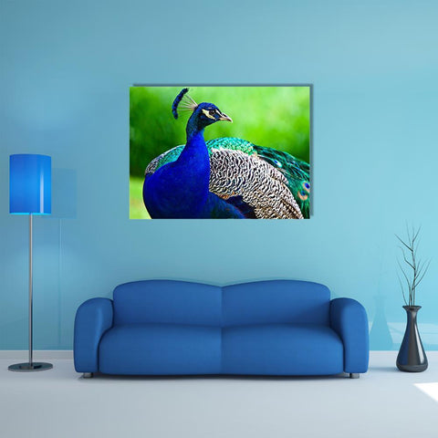Image of New Day Stock Store Canvas Paintings Medium / 1 Piece / No Frame Close-Up Of Indian Peacock Multi Piece Canvas Set