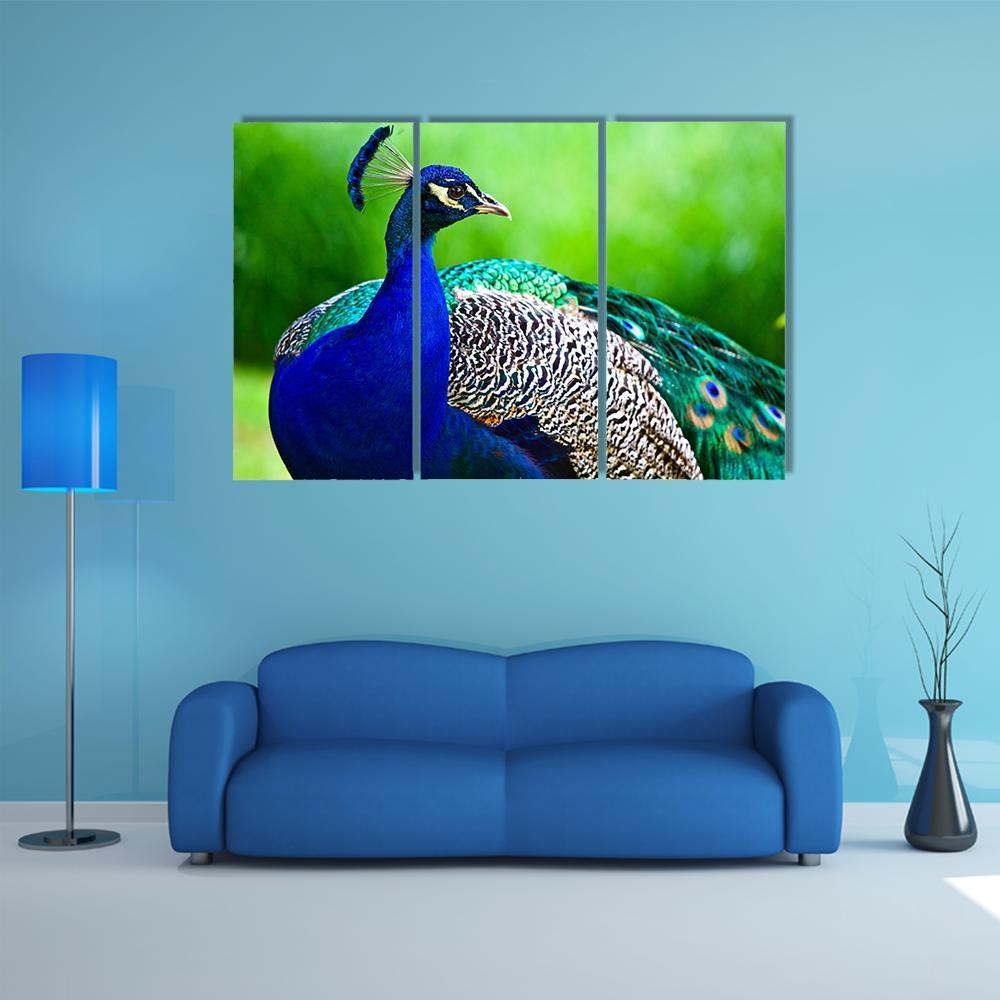 New Day Stock Store Canvas Paintings Medium / 3 Pieces / No Frame Close-Up Of Indian Peacock Multi Piece Canvas Set