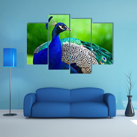 Image of New Day Stock Store Canvas Paintings Small / 4 Pieces / No Frame Close-Up Of Indian Peacock Multi Piece Canvas Set