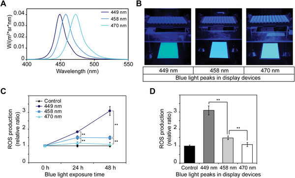 Blue Light production of reactive oxygen species
