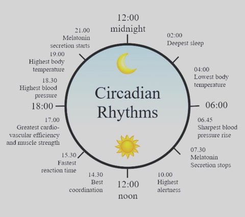 Circadian Rhythm Cycle Chart