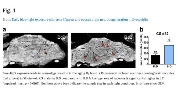 Damage to brain from blue light exposure