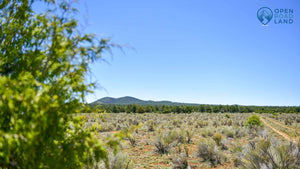 UNDER CONTRACT | 10 ACRES | LOT 31 TIERRA VERDE RANCHETTES | CIBOLA COUNTY | NEW MEXICO | $7,999 | SECURE TODAY...