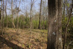 18.93 Acres | Newberry County | South Carolina | $80,000 | Secure Today...