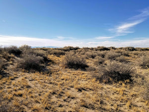 40 Acres | Alamosa County | Colorado | $9,500 | Secure Today....