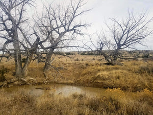 40 Acres | Las Animas County | Colorado | $7,499 | Secure Today....