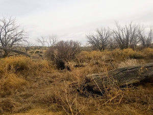 SOLD | 40 Acres | Las Animas County | Colorado | $7,499 | Secure Today....