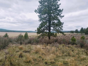 20 Acres | Klamath county | Oregon | $14,499 | Secure Today...