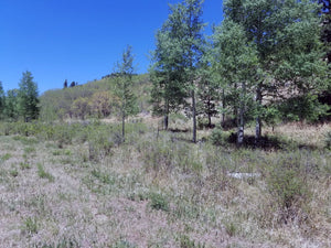 35.18 Acres | Huerfano County | Colorado | $99,000 | Secure Today....