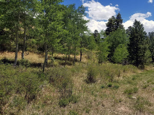 35.18 Acres | Huerfano County | Colorado | $65,000 | Secure Today....