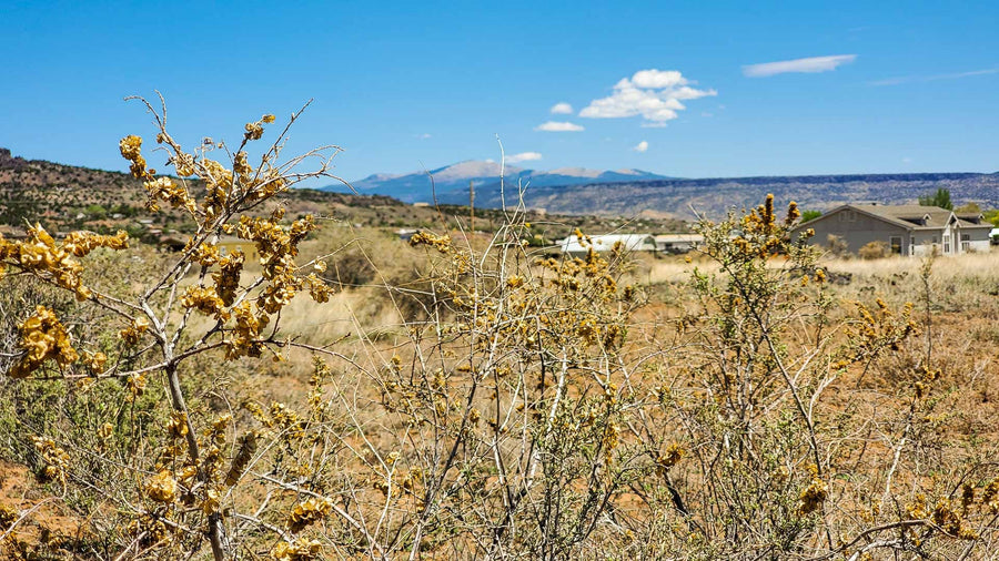 UNDER CONTRACT | 1.68 ACRES | ZUNI CANYON ROAD | GRANTS | NEW MEXICO | $20,000 | SECURE TODAY…