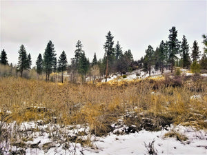UNDER CONTRACT | 80 Acres | Klamath County | Oregon | $49,900 | Secure Today...
