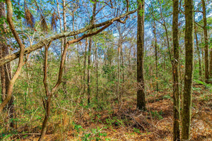 UNDER CONTRACT | 5 ACRES | JACKSON COUNTY | VANCLEAVE | MISSISSIPPI | $35,000 | SECURE TODAY...