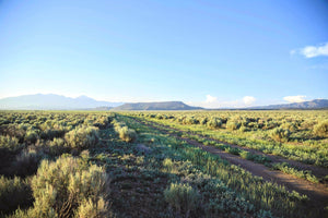 SOLD | 40 Acres | Costilla County | Colorado | $12,499 | Secure Today...