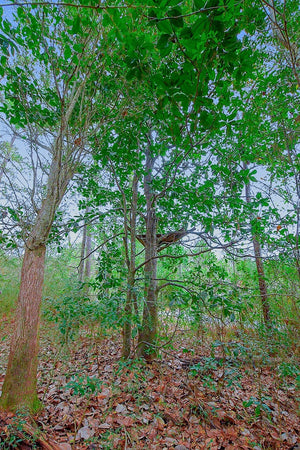 0.26 Acre Lot | Magnolia St | Jackson County | Mississippi | $6,000 | Secure Today...