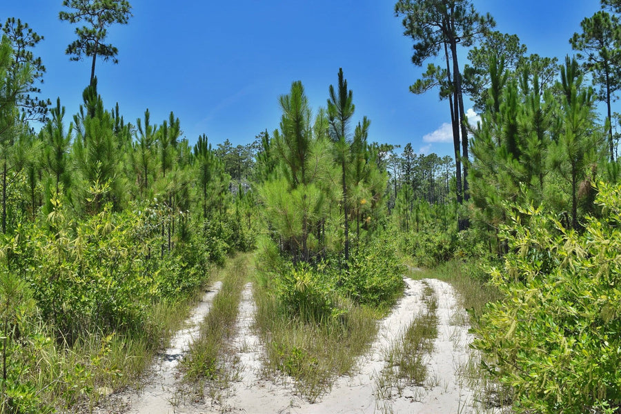 PENDING | 40 ACRES | JACKSON COUNTY | MISSISSIPPI | $49,997 | SECURE TODAY....