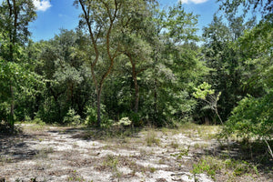 40 ACRES | JACKSON COUNTY | MISSISSIPPI | $64,997 | SECURE TODAY....