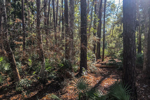 0.26 Acre Lot | Gum St | Jackson County | Mississippi | $4,500 | SECURE TODAY...