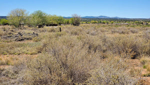 1.13 ACRES | CIBOLA COUNTY | NEW MEXICO | $18,000 | SECURE TODAY...