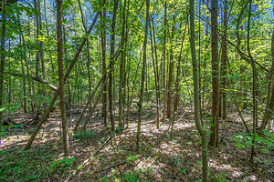 SOLD 10.39 Acres | Stokes County | North Carolina | $40,000 | Secure Today...