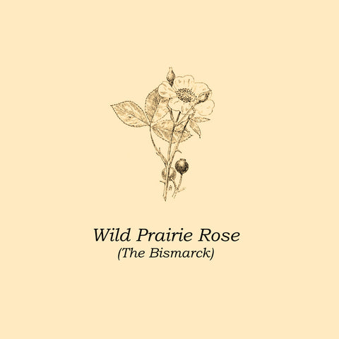 "The Bismarck : ""Wild Prairie Rose"" Lp"