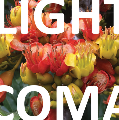 "Light Coma : ""Concord"" Lp"