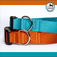 Orange of Ice Blue Dog Collar
