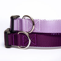 Purple Dog Collar