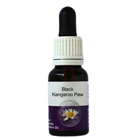 Living Essences Black Kangaroo Paw 50ml