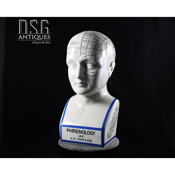 12 Inch Porcelain Phrenology Head Bust