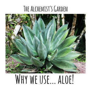 Why we use: Aloe Vera!