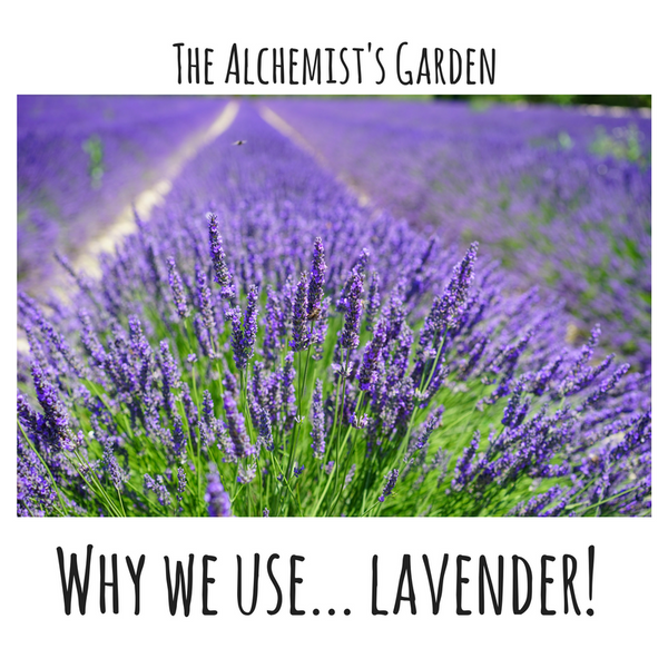 Why we use... Lavender!
