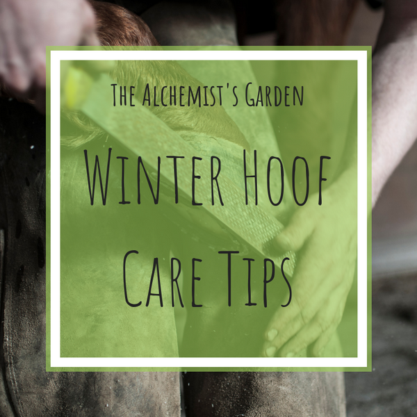 Essential Winter Hoof Care Tips!