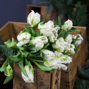 Tulipe blanche (10 tiges)