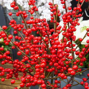 Ilex rouge 40/50 cm (5 tiges)